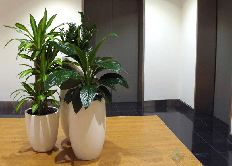 Indoor-Plant | Featured image for best office plants.