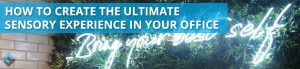 How to Create the Ultimate Sensory Experience in Your Office