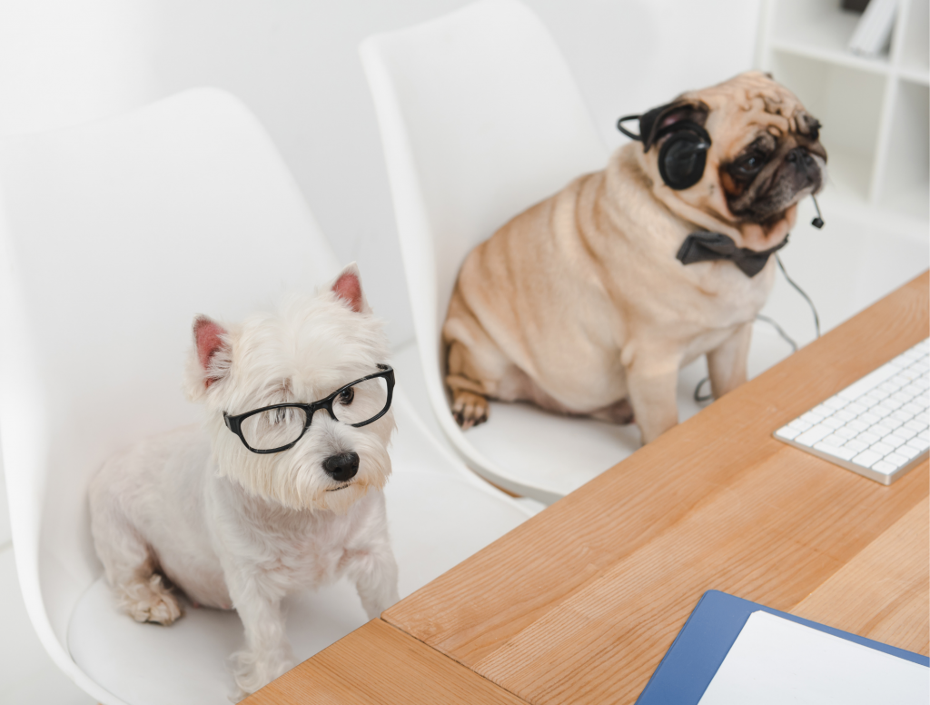 Dogs working hard in the workplace | | Featured image for Pets in the Workplace blog.